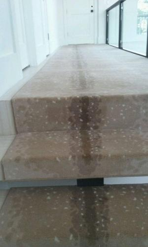 Unique Carpet For Hallway and Stairs